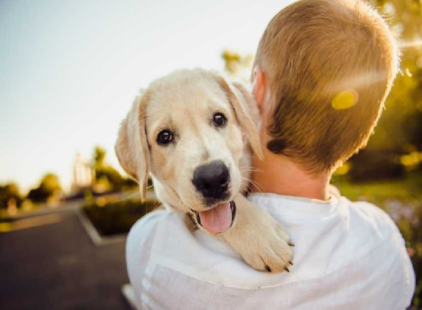 10 Signs will tell you're ready to have a Puppy or Not!