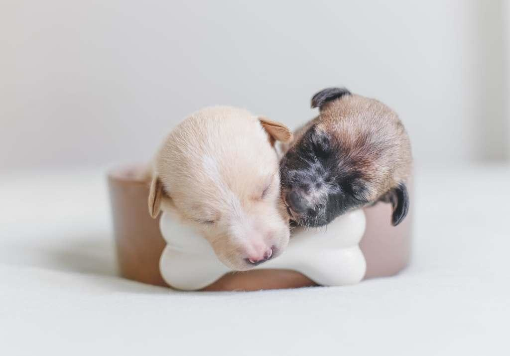 Cute cuddling puppies