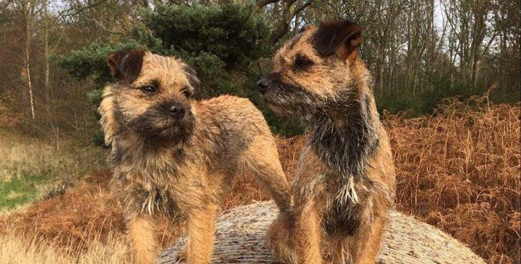 twin scots