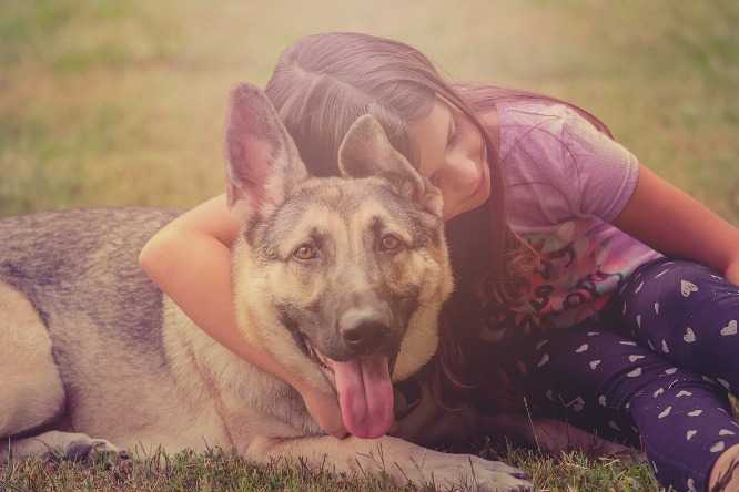A young girl with German shepherd