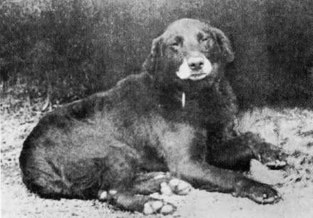 Adjutant Dog