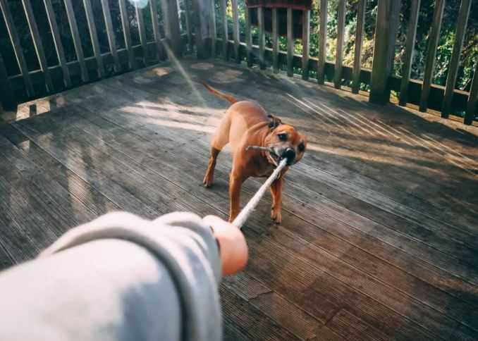 Dog Biting Rope