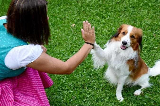 Handshaking a dog