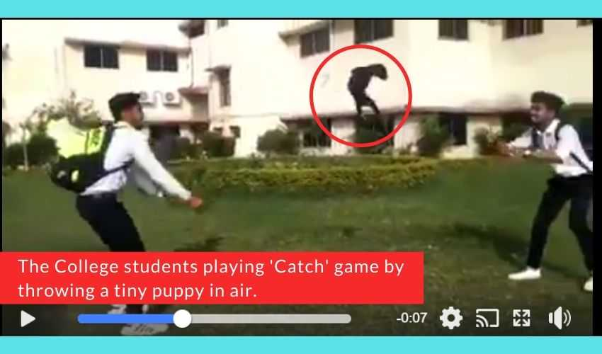 2 Students were caught in a video throwing a puppy in air for fun in India