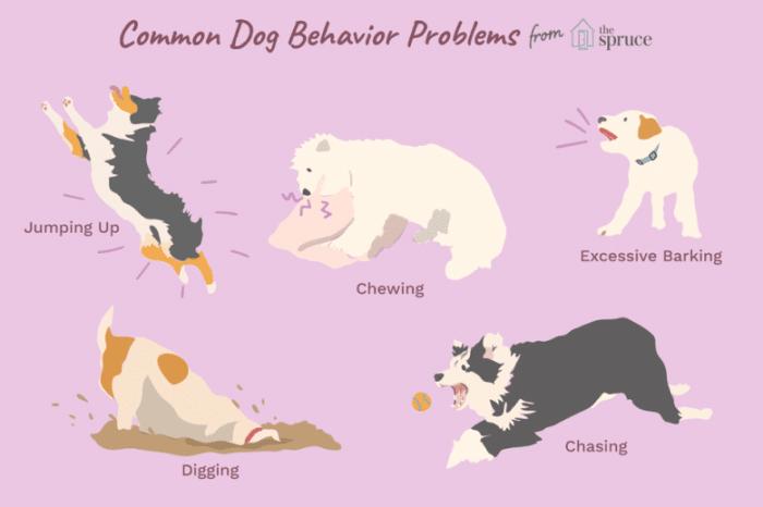 common-dog-behavior-problems-