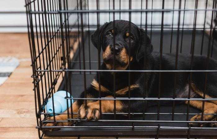 dog in black cage