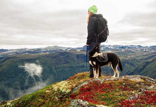 A woman hiking with a dog and standing on a Hill top.