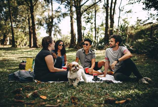 A group of people having a picnic with a small dog