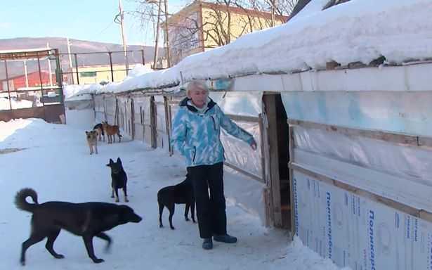 0_PAY-Nika-the-sheter-dog_4_Dog-and-Cat-shelter_TheSiberianTimes