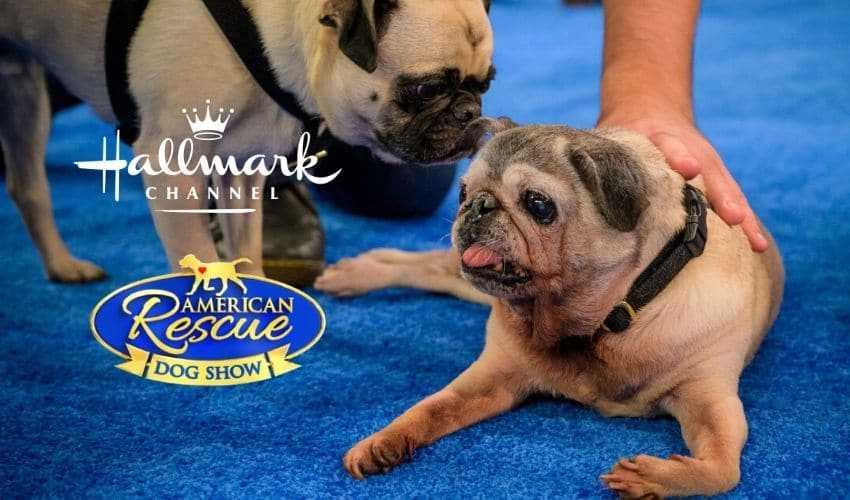 American Rescue dog show 2020