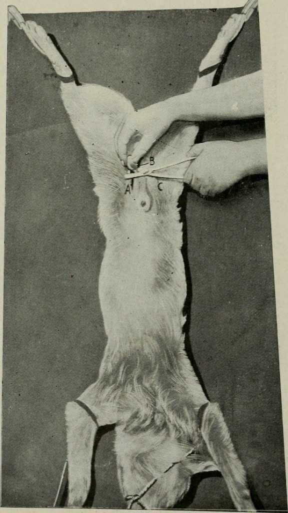 Animal_castration;_a_book_for_the_use_of_students_and_practitioners_(1920)