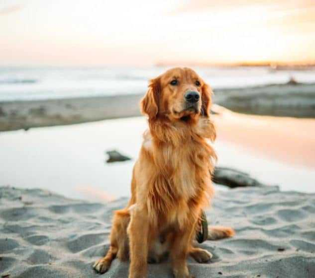 Dog in a beach