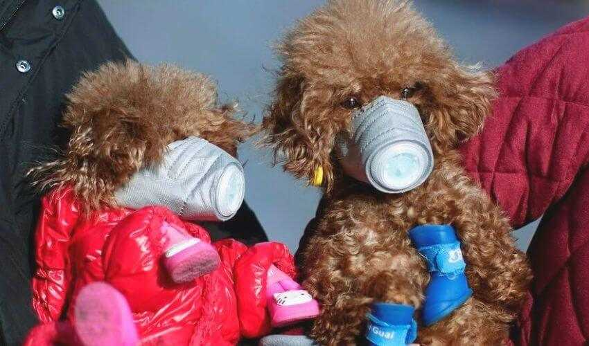 Dog testes positive for coronavirus in hongkong