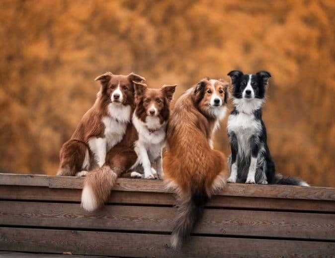 Dogs on Wooden Bench