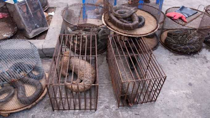 Myanmar_Illicit_Endangered_Wildlife_Market