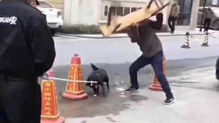 Dog is beaten by Chinese Official