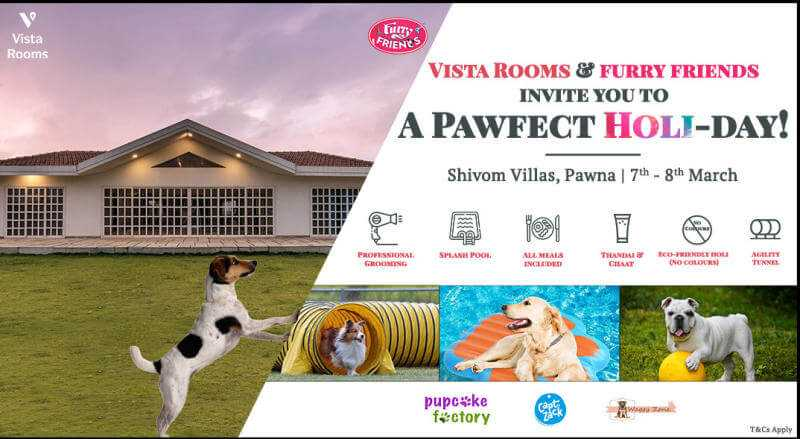 Celebrate an Eco-friendly and Eco-Furry Holi with your pet at Vista Rooms