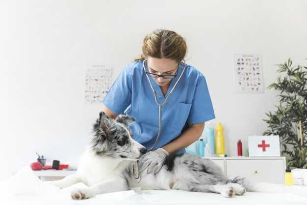 veterinarian-checking-dog
