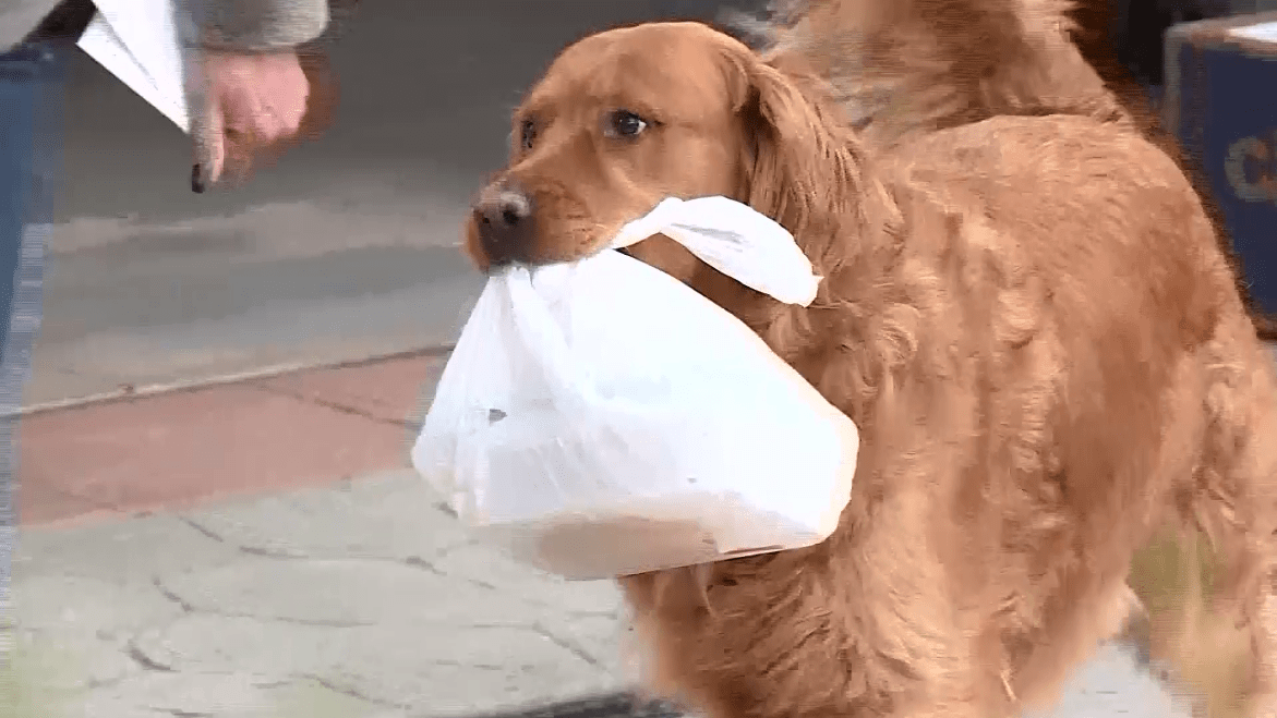 Colorado Dog Turns Grocery Deliveryman Amidst Covid19 Pandemic