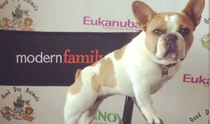 Modern Family' Star French Bulldog