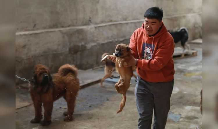 Sick officials in China offer money for slaughtered pets
