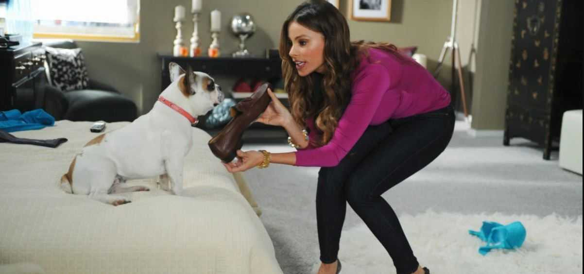 Stella, The Adorable French Bulldog of Modern Family, Dies After Shooting The Series Finale