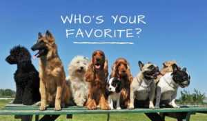Top Favorite Dog Breeds That Dominated Last 100 Years of Trends