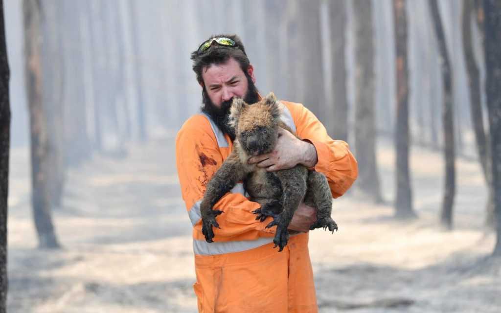A Firefighter rescued a burned koala during the Australia Bushfire.
