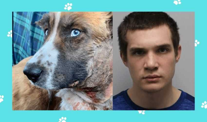 Man Arrested in Tennessee for Abating Dog Fight And Causing the Death of a Young Dog