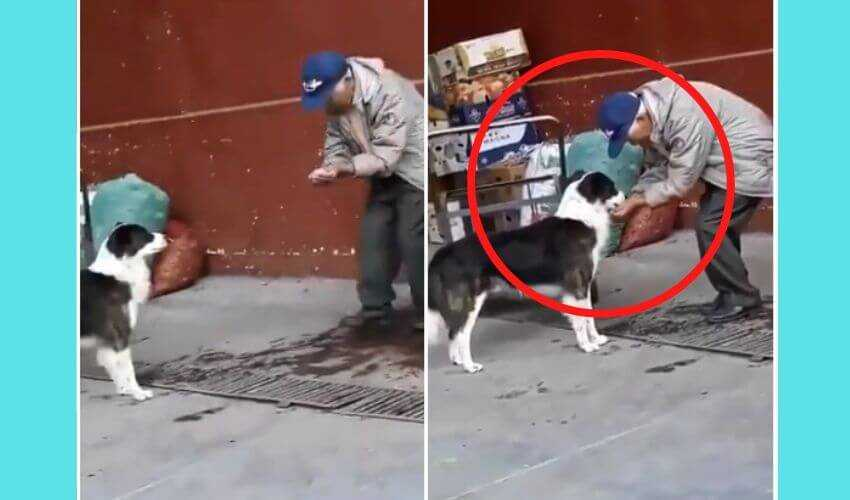 old man feeding water to stray dog
