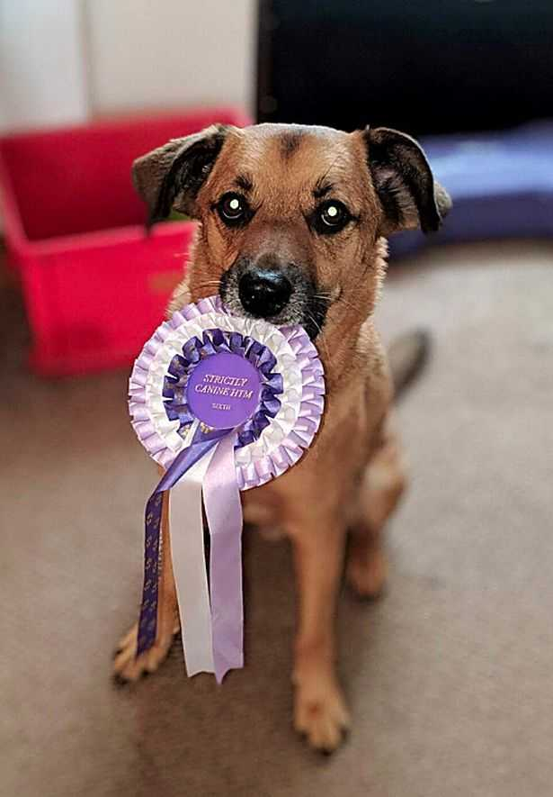 The rescued dog Yogi standing with a winning badge in his mouth at Cruft 2020