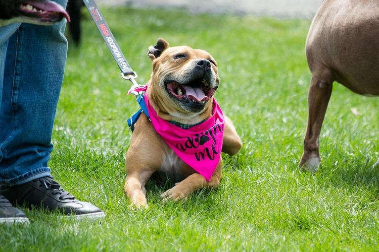 Coming May Finally Has Some of The Best Virtual Dog-Friendly Events to Check Out!