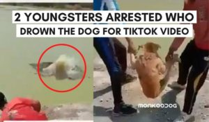 2 young boys tied and throw the dog in pond for tiktok video