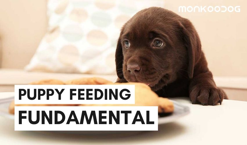 How You're Feeding Wrong to Your Puppy | Puppy Feeding Guide