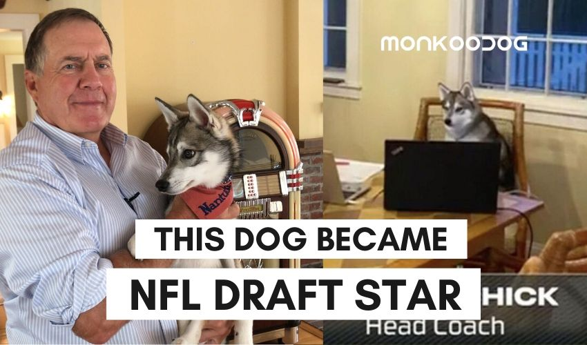 Nike, Bill Belichick's Dog Become The Viral Sensation Post-NFL Draft 2020