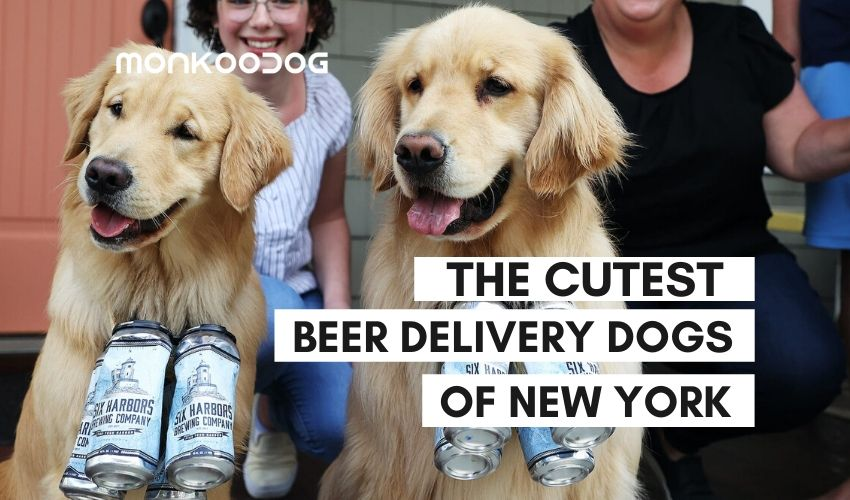 The Brew Dogg Delivering Beer To Customers Under Lockdown is the New Adorable Story