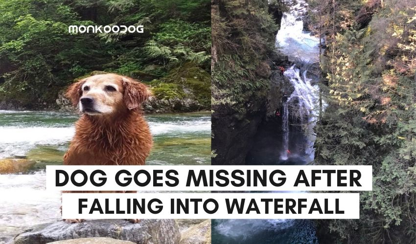 dog goes missing after falling into waterffall