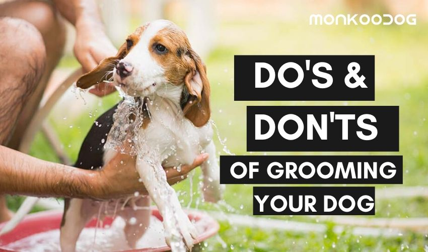 The Ultimate Guide To a Perfectly Groomed Pet