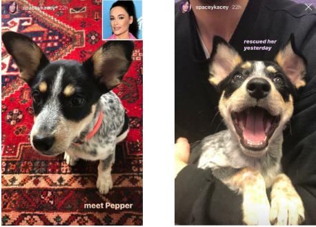 Pepper Kacey Musgrave's dog