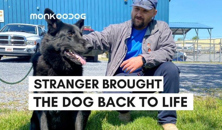 Virginian construction worker deemed social media hero after he saves dog with mouth to mouth resuscitation