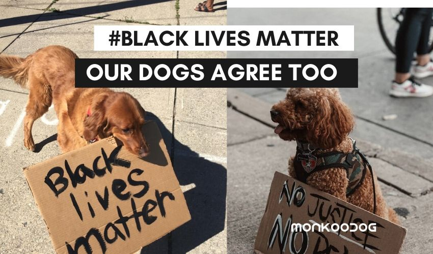 'Black lives matter' - even dogs seem to be agreeing to fight for the cause