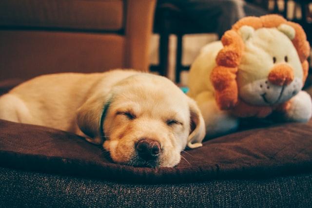 puppy sleeping on the floor