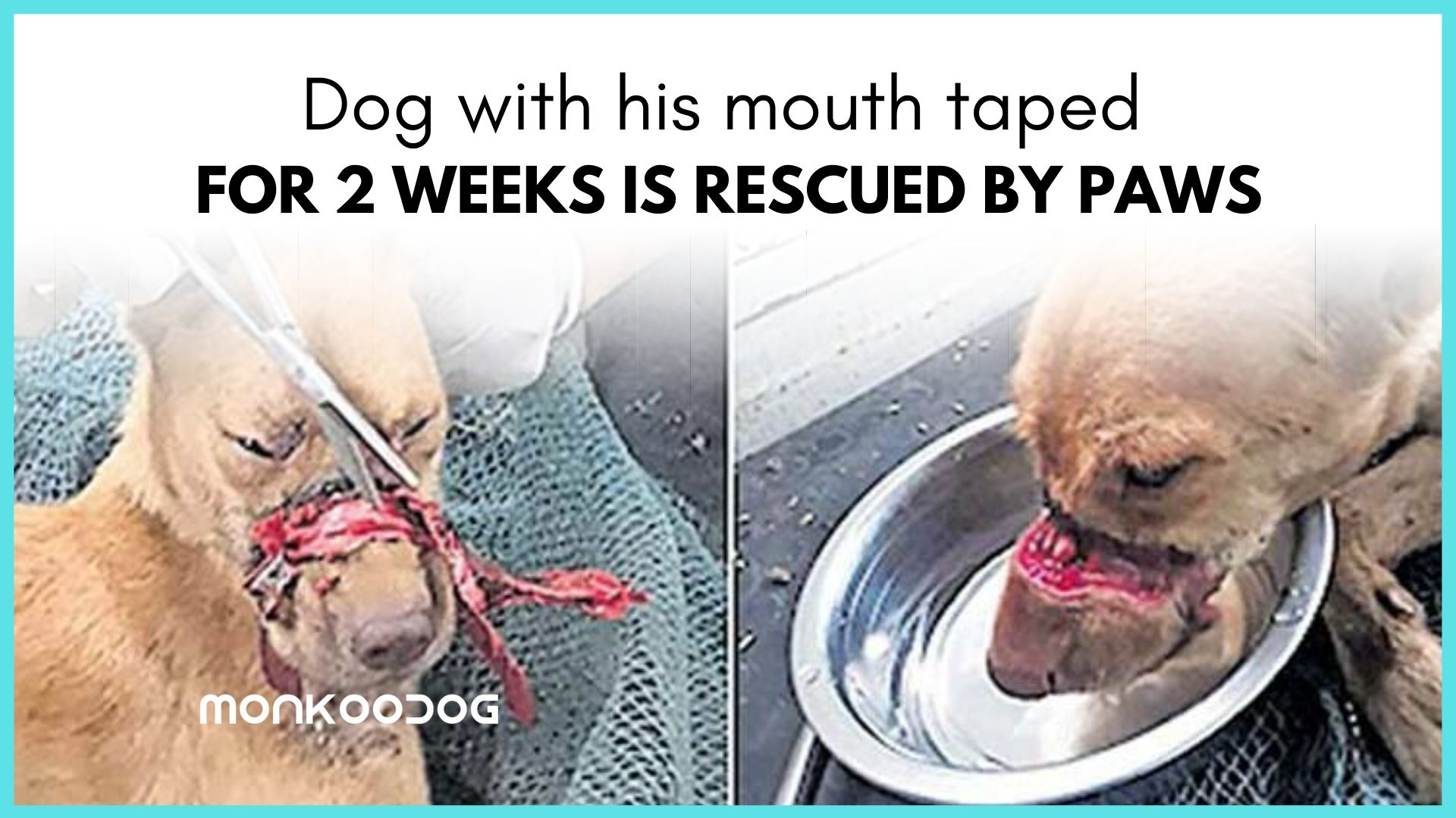 dog with his mouth sealed with tape for 2 weeks rescued by paws in Kerala