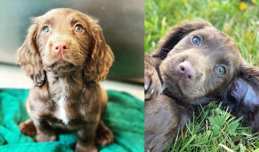 James Middleton's new puppy - Nala.