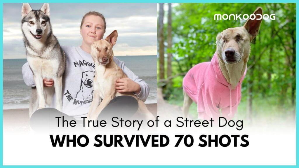 Lebanese dog becomes an inspiration after recovering from being shot over 70 times in her lifetime