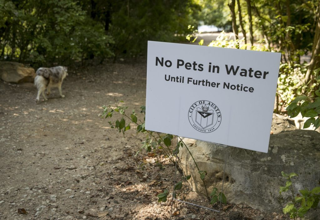 A board sign saying 'No Pets in Water until Further Notice' with a dog walking in background right after an alert of Austin's dog killing algae seems to be back in bloom with the rising temperature