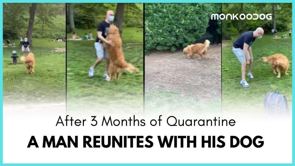 Reunion of a Dog with Owner After 3 months of Separation Results in a Viral Emotional Video on Reddit