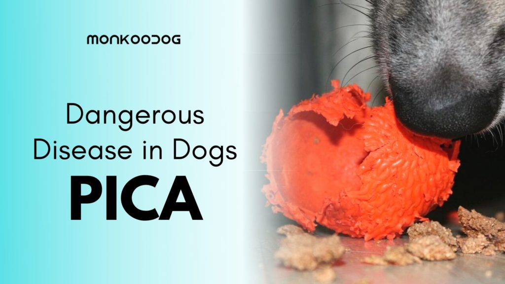 Should You Overlook Pica in your dog_ Symptoms, Causes, and Treatment of Pica in dogs by Monkoodog