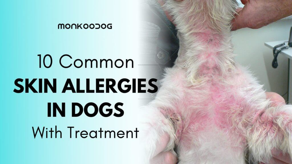 Skin infection in dog - an important yet neglected condition in dogs with treatment
