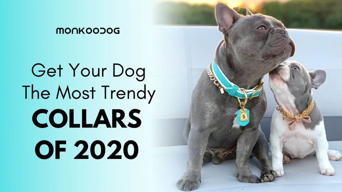 The Most Trendy And Cool Dog Collars of 2020 To Buy For Smaller Dogs